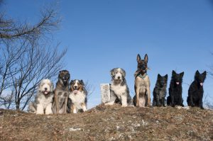 Eight dogs